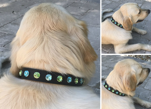 XLarge Dog Collars- Jewlery
